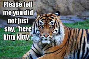 "#8. Please tell me you did not just say ""here kitty kitty."""
